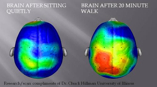 Hjerne og motion