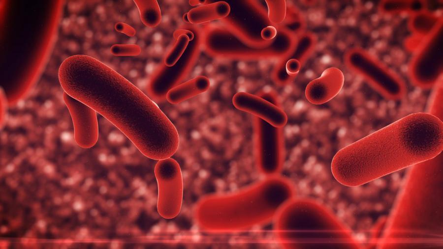 Tarmens bakterier