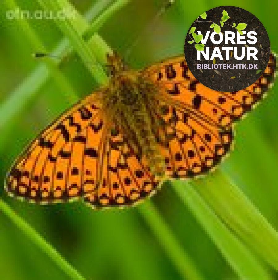 """""""Fremtidens Natur"""" er en del af temaet VORES NATUR"""