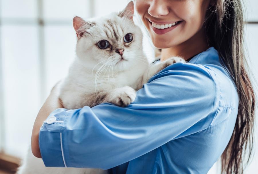 Hunde- og kattesygdomme: Hvordan forsker dyrlæger?