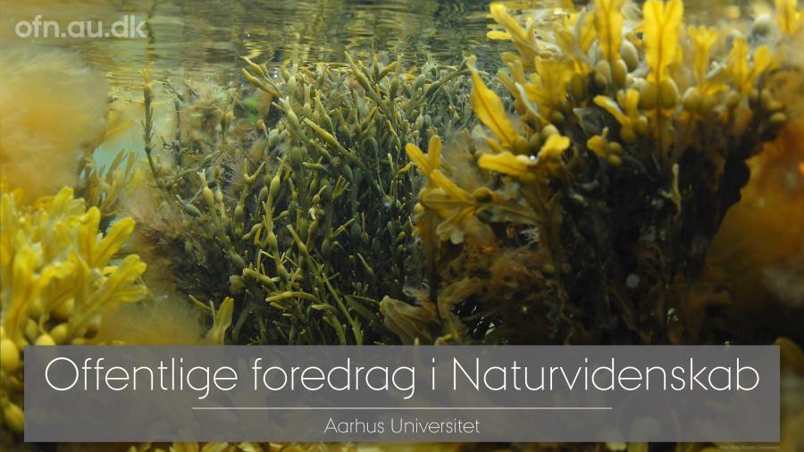 Livestream fra Aarhus Universitet: Tang